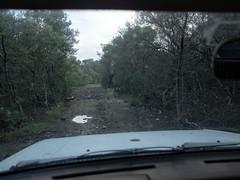 _R061906 (guillermo.d) Tags: mangrove manglar road camino grd color costarica parquenacionalsantarosa guanacaste