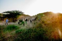 L1003368.jpg (Bharat Valia) Tags: pushkarfair bharatvalia desert rajasthanportraits bharatvaliagmailcom sheperd pushkarimages pushkarmela festivalsofindia camel pushkarcamelfair pushkar