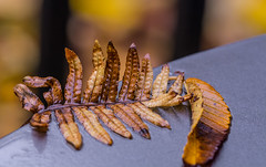 Fern's and Leave's. (Omygodtom) Tags: macro bokeh season abstract art flickr fall facebook tamron90mm outdoors composition dof pov park natural nature nikon d7100 colorful