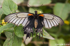 Mariposa 5 (Manolo G.A.) Tags: canon 50d 18200 mariposa butterfly mariposario njar almera