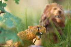 Ide originale (antoinebouyer) Tags: animaux herbe