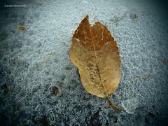 Foglia di ghiaccio (sandra_simonetti88) Tags: foglia leaf ghiaccio ice winter inverno freddo cold nature macro natura autunno fall autumn outdoor details