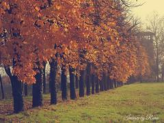 Sole dautunno (ramonapartelli) Tags: piante pianta allaperto foglie calma autunno