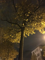 Autumn - like a painting!! (Sira2015) Tags: yellow old leaves oldleaves orange fall autumn winter evening leaf yellowleaves dryleaves serene calm likeapainting