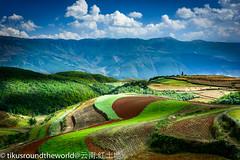DSC_2099 (Edwin Lim Soo Yong) Tags:       yunnan  earth sky cloud    crops tikusroundtheworld