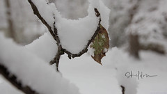 First snow of the Winter in Waukesha WI by sheldn (2sheldn) Tags: first snow winter waukesha wi sheldn canon t5i white tree leaf branch