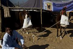 Pushkar, 2016 (bmahesh) Tags: cwc pushkar rajasthan india people horse street life sigma35mmf14 sigma wwwmaheshbcom