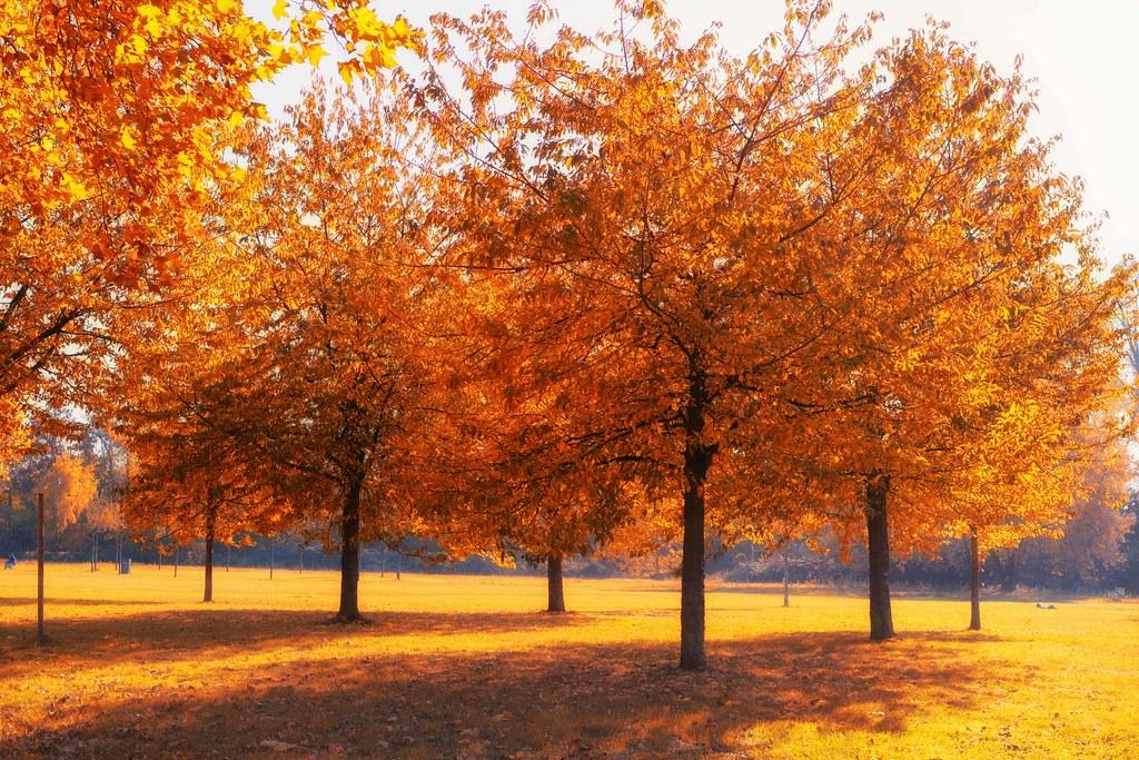 Burning trees of Karlsruhe