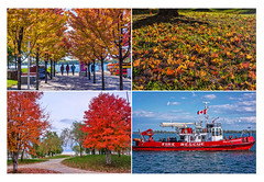 aflamewiththefierycoloursoffall (mooncall2012) Tags: toronto onario fall cans2s sony a77 harbourfront