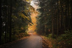 An Autumn Morning (desomnis) Tags: woods wood woodland nature landscapes photography trees autumn autumnal autumncolors landscapephotography naturephotography road street mhlviertel austria sterreich obersterreich upperaustria desomnis autumnfoliage colorful colouful 35mm sigma35mm f14