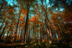 Little Peace of Mind (lutzheidbrink) Tags: wood woods woodland forest nature naturephotography nikon d5000 germany travel travelphotography