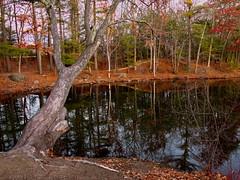 Mine Falls Park - Nashua River 7 (dennisgg2002) Tags: nashua river new hampshire nh autumn fall