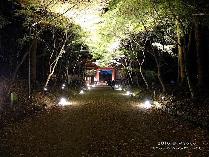 2016醍醐寺夜楓15.JPG