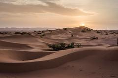 Berber's Sandbox (Mopple Labalaine) Tags: soussmassadraa morocco mhamid marokko desert sahara sand sandbox sun sunrise sunset wave morning berber
