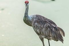27 (photocat001) Tags: flamingogardens botanicalgardens animals wildlife nature parks recreation interesting