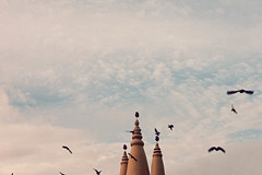 Where only birds can go (jartana) Tags: singapore littleindia sky cielo palomas pigeons shreelakshminarayantemple templo shreelakshminarayan