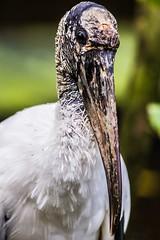 10 (photocat001) Tags: flamingogardens botanicalgardens animals wildlife nature parks recreation interesting