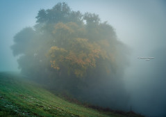 Softone (Ingeborg Ruyken) Tags: 2016 500pxs empel empelsedijk herfst autumn dawn dropbox fall flickr fog mist morning natuurfotografie ochtend october oktober pond sunrise wiel zonsopkomst