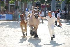 trekpaardkeuring ijzendijke 21072013 3896 (jo_koneko_san) Tags: horses horse holland netherlands cheval nederland zeeland chevaux hollande zeeuwsvlaanderen 2013 ijzendijke zeeuwstrekpaard