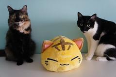 DSC02507 (Kirayuzu) Tags: cats cat loki plushie katze meia katzen kater plschi nemuneko