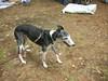 GreyhoundPlanetDay2008049