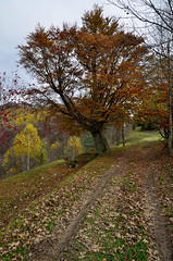 Autumn colors (samuelloz) Tags: italien autumn italy colors geotagged photography photo nikon europe italia foto photographer photos autumncolors itali autunno italie itali photograpy   italija   coloriautunno  d7000 nikond7000 d7000nikond7000