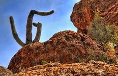 Saguaro Cactus (aeneas66) Tags: blue arizona cactus sky orange cloud mountain southwest color tree yellow sonora cacti landscape outdoors colorful solitude open desert bright tucson vegetation saguaro desolate range yucca cholla southwestern outstanding stately prominent
