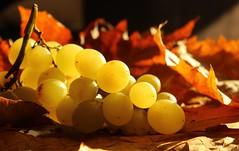 Día 247 - Uva (Filo Schira) Tags: uva grape raisin uvas grappe