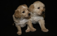 IMG_2271 (Pedro Montesinos Nieto) Tags: dog perro cachorros fragile mascotas laedaddelainocencia frágiles