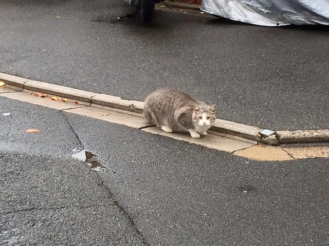 Today's Cat@2013-12-10