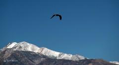 Mono Lake Osprey (zeesstof) Tags: california statepark park lake snow mountains geology monolake sierranevada canon7d canonefs18135mmf3556is zeesstof