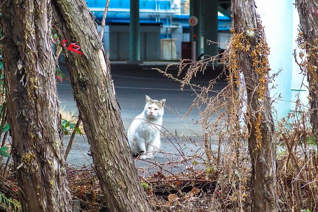 Today's Cat@2014-01-02
