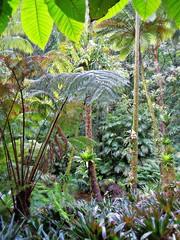 ~11-21-11/Oahu Trip #3~ (TravelsThruTheUniverse) Tags: tropicalplants tropicalgardens tropicalfoliage tropicallandscapes