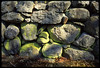 RSX_ROCKWALL204 (RichS85) Tags: usa green nature outdoors island rocks pattern maine newengland pile barrier lichen northeast islesboro downeast