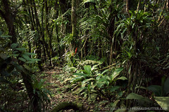 (Techuser) Tags: parque trees nature forest rainforest path atlantic trail da bromeliad mata atlantica ona parda canon1855is