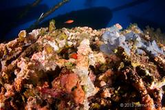 ...y de entre los hierros surgi la vida (Jaime Franch) Tags: diving formentera buceo baleares laplataforma tokinaatx107dxfisheyeaf1017mmf3545 mediterraneo visemanafotografiasubmarinaformentera