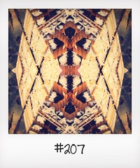 "#DailyPolaroid of 23-4-14 #207 • <a style=""font-size:0.8em;"" href=""http://www.flickr.com/photos/47939785@N05/14099024452/"" target=""_blank"">View on Flickr</a>"