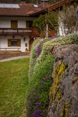 Suspended garden (hajer_bc) Tags: alps nature germany bayern deutschland bavaria see alpen knigssee schnau