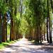 Seguindo+a+estrada