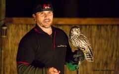 3J9A9290 (Noel Roberts) Tags: owl masked barnowl barkingowl landsborough steveirwinway raptorvision ewanmaddockdamcamp maskedowlaustralian owlowletowlaustralian