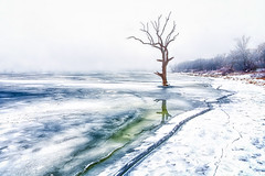 Winter Tree Revisited (Kansas Poetry (Patrick)) Tags: winter frozen lake frozenlake kansas clintonlake lawrencekansas patrickemerson patricklovesnancy
