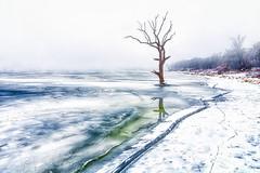 Winter Tree Revisited (Kansas Poetry (Patrick)) Tags: winter frozen lake frozenlake kansas clintonlake lawrencekansas patrickemerson patricklovesnancy