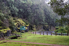 20161018-01-Hailing (Roger T Wong) Tags: 2016 australia hobart mtwellington rogertwong sel2470z sony2470 sonya7ii sonyalpha7ii sonyfe2470mmf4zaosscarlzeissvariotessart sonyilce7m2 tasmania wellingtonpark hail rain walk