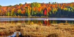 canoing in paradise (anj_p) Tags: southalgonquin robinsonlake colorfulscenery lake foliage fall autumn conoe paddling serene canoing ontario canada platinumheartaward