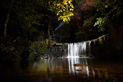 Searching by the River (Ben Lockett) Tags: 1740l 5d canon outdoor nature longexposure self water trees rocks woodland forest woods leaves branch autumn manmade knyperselypool trent torchlight torch night lights person waterfall river