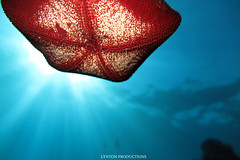 IMG_0069 copy (Aaron Lynton) Tags: lyntonproductions ocean turtle starfish maui hawaii canon g1x