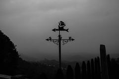DSC_3315 (UdeshiG) Tags: mountain hike hillcountry teaestate mist sambar eagle hortonplains ohiya sunrise sky haputale nikon trek adisham