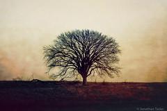 Lonesome Tree (Jonathan Tasler) Tags: tree lonetree kansas wabaunseecounty texture