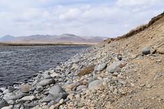 MAQ_0449 (MolviDSLR) Tags: deosair national park skardu gilgit baltistan northern areas pakistan brown bear wild life scenery landscape