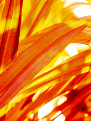 The Burning Sun (Steve Taylor (Photography)) Tags: red yellow bright hot burning scorching art digital white newzealand nz southisland canterbury christchurch city cbd leaves reeds